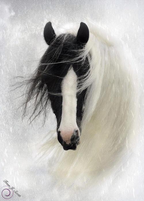 Hevoset kestävät kaiken