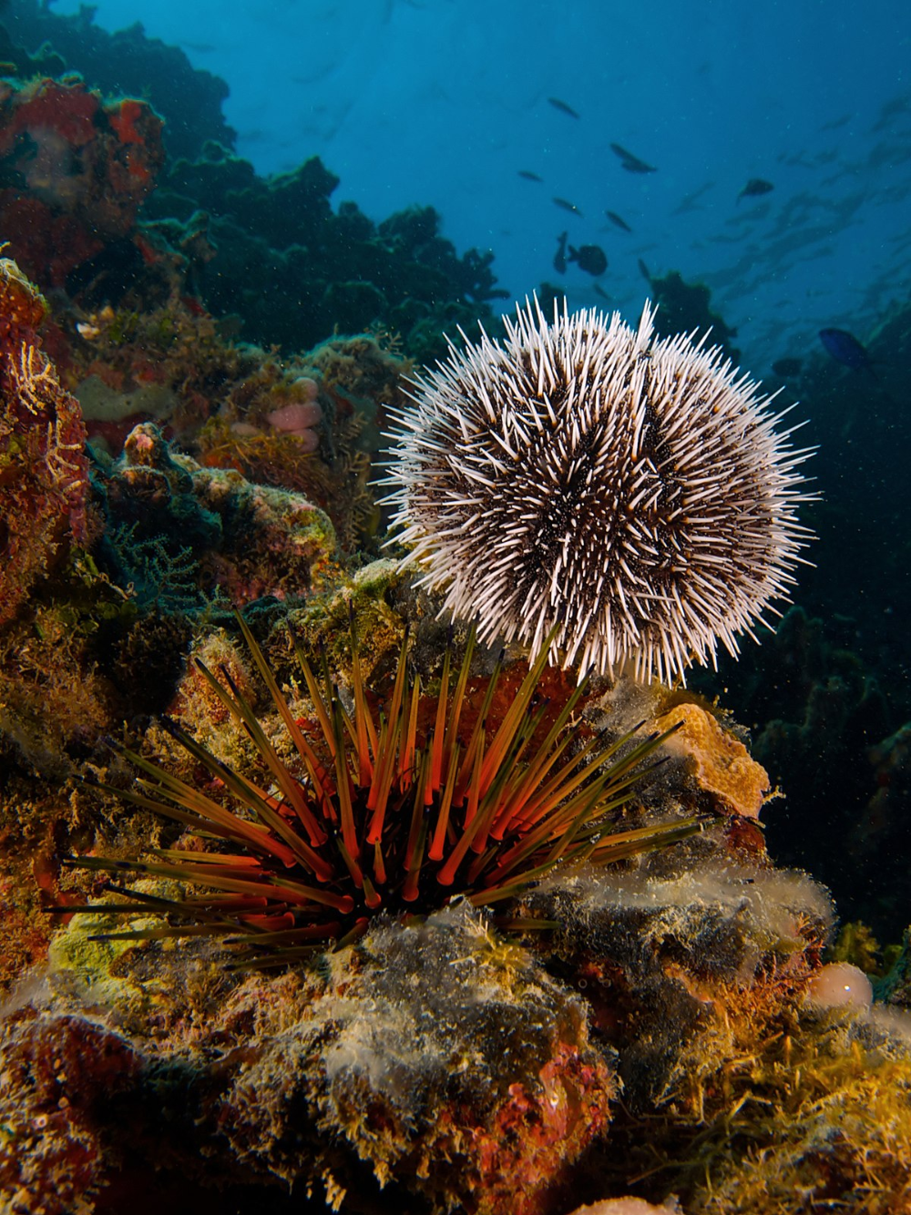 Pin By Martin Erwin Muller Gelinek On Que Nota In 2020 Sea Egg Sea Urchin Sea Animals
