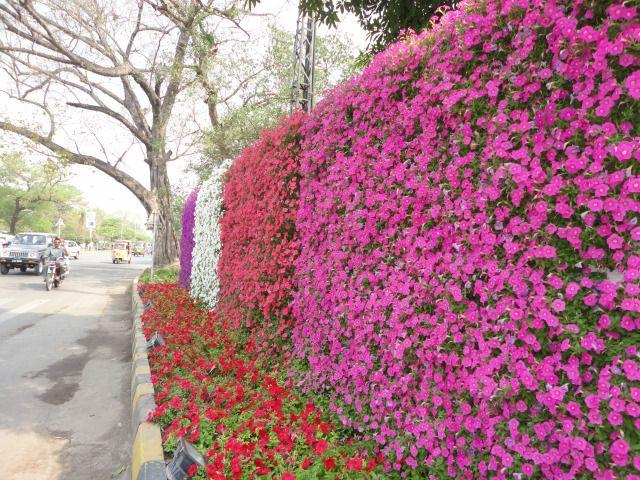 Petunia Living Wall Ocean Garden Plant Wall Living Wall