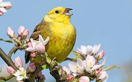 Birds Singing | ... Bird Singing: Bird Song Intensity Used To Calculate Size