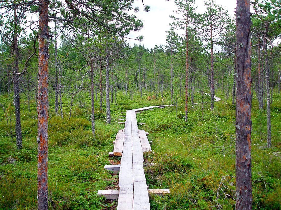 Pilpasuo - Luontopolut ja suojelualueet - Ympäristö ja luonto - Ympäristö ja luonto - Oulun kaupunki