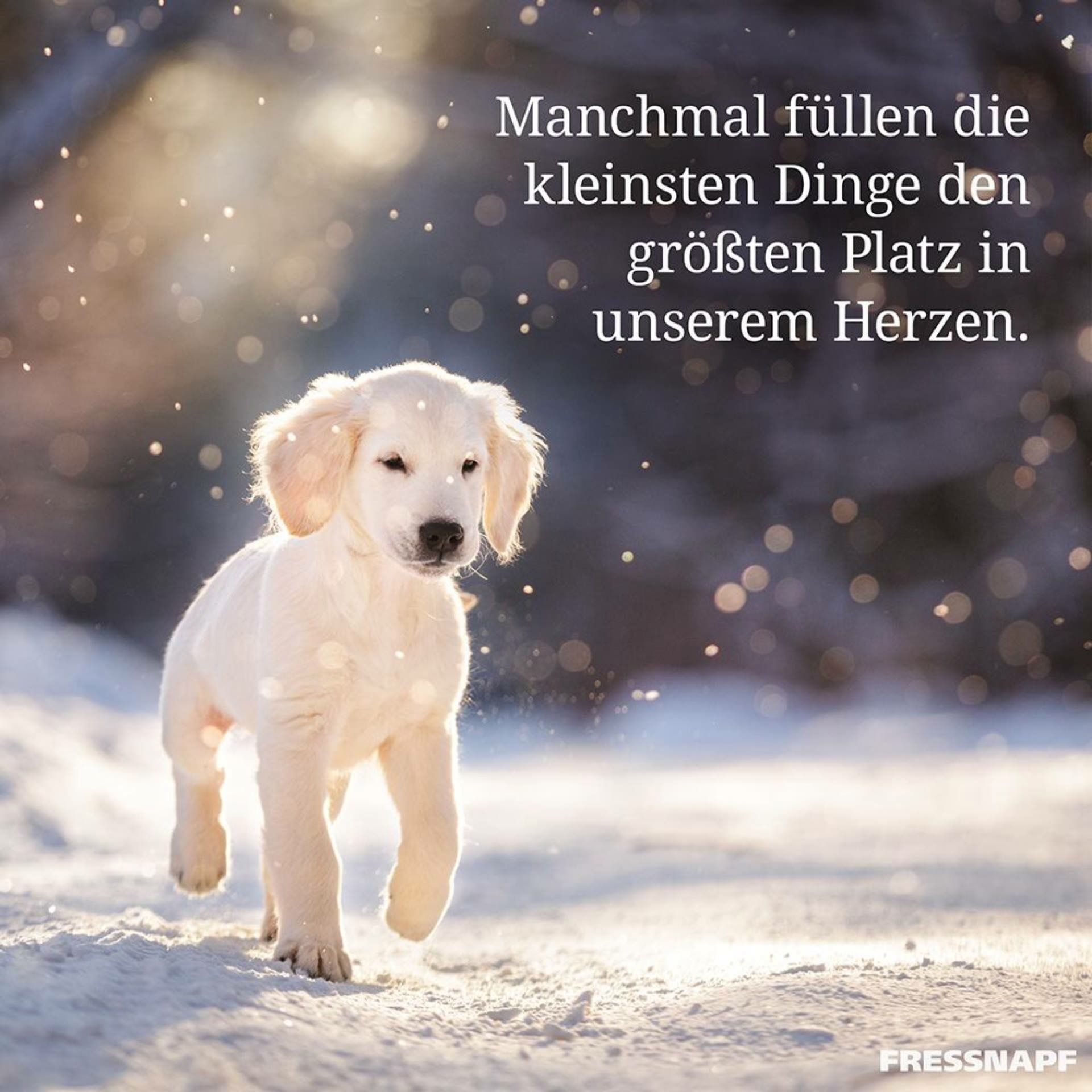 Pin Von Jasmina Kollmannsperger Auf Memo Boards Spruche Spruche Tiere Spruche Tierliebe