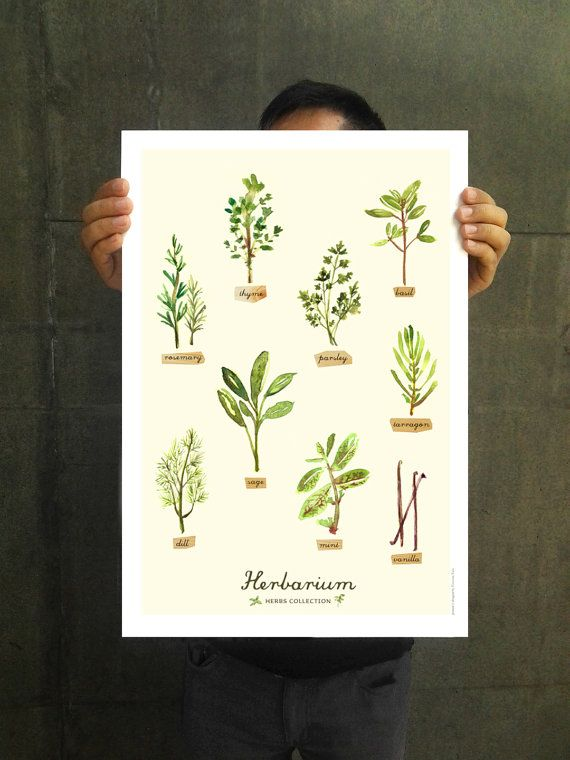 Kitchen Print Herb Watercolor Painting Herb Chart Kitchen