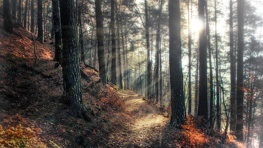 Misty Morning (Saxon Switzerland, Germany) by Chris R / 500px
