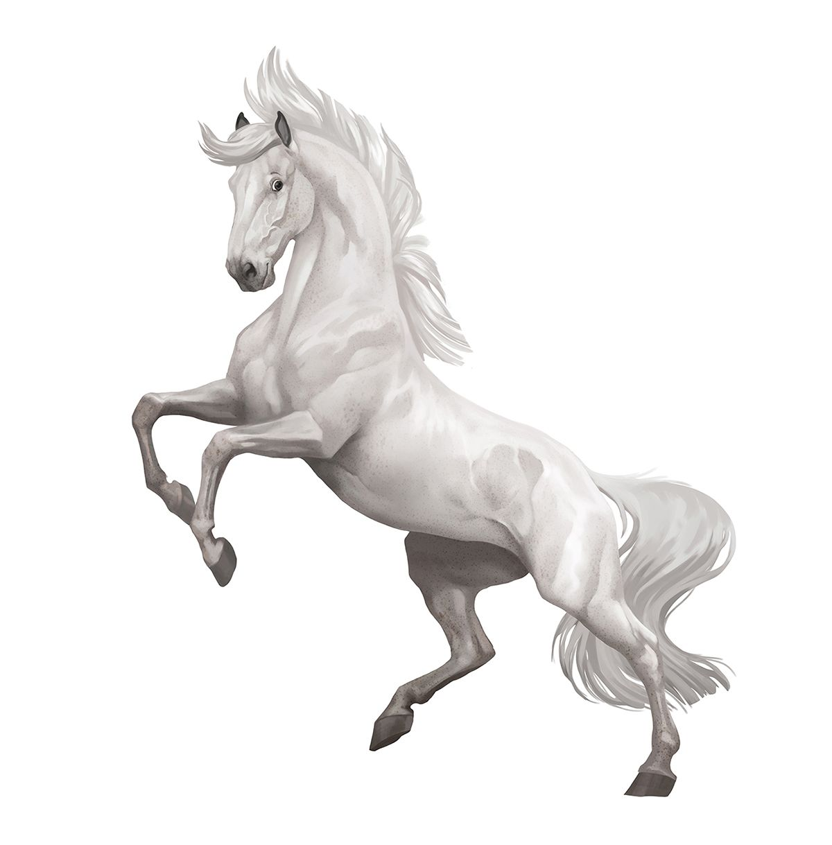 Star Stable Online on Behance | Breyer horses | Pinterest | Arte