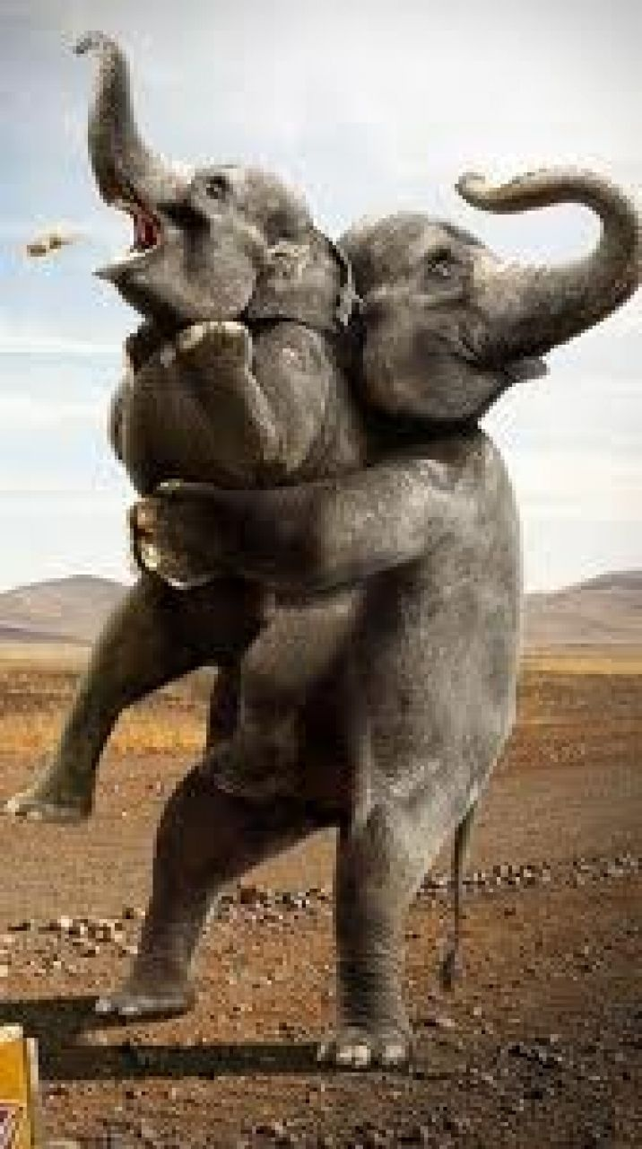 Wallpaper download elephant - Cat Funny Animated Hd Mobile Wallpapers Free Download Top 10