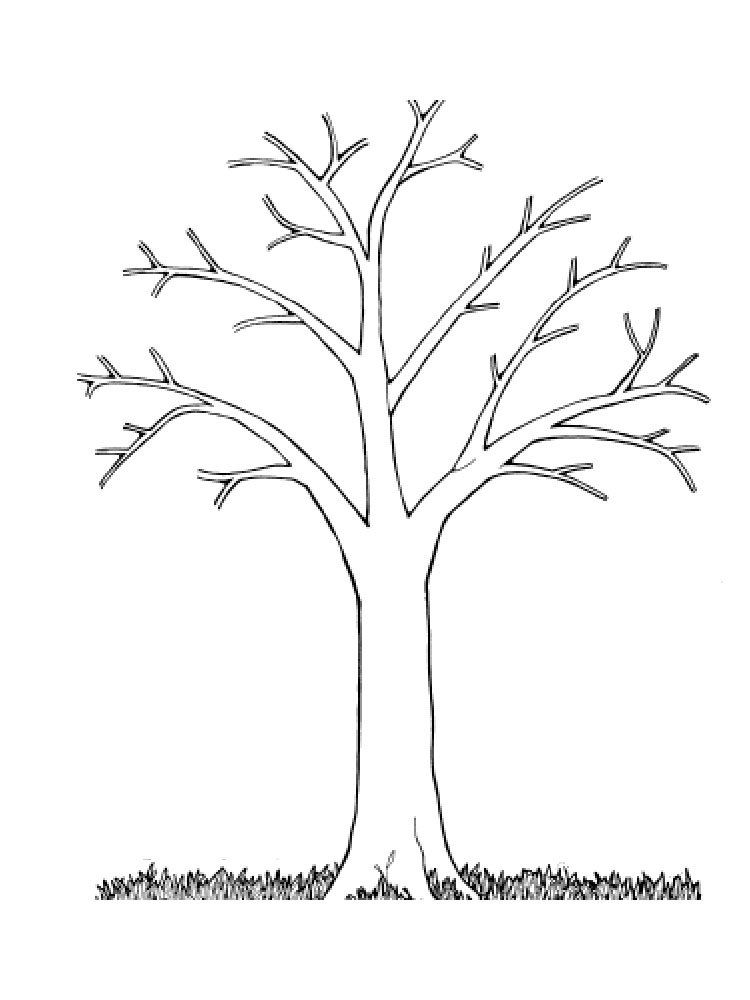 Kartinki Dereva Bez Listev 35 Foto Zabavnik Tree Coloring Page Leaf Coloring Page Tree Outline