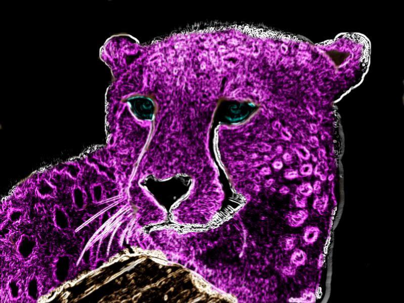 purple neon pictures purple neon cheetah photo
