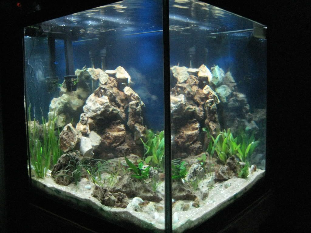 Lovely Cichlid Forum U2022 Stocking / Aquascaping Help Plz   60 Gallon Cube