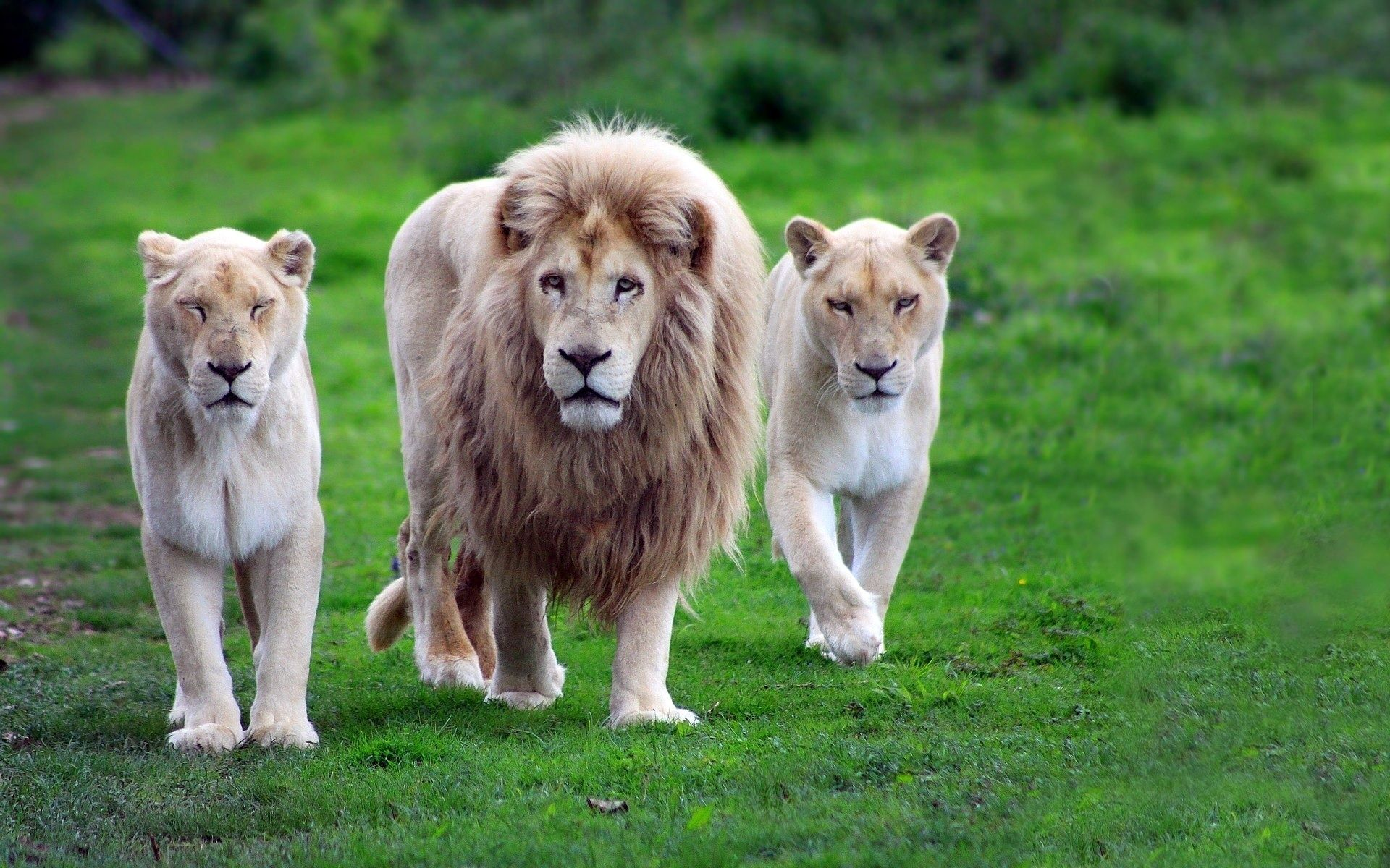 Best Wallpaper Horse Lion - 7d6ace653d02bc89edca38884a552f36  Perfect Image Reference_21393.jpg