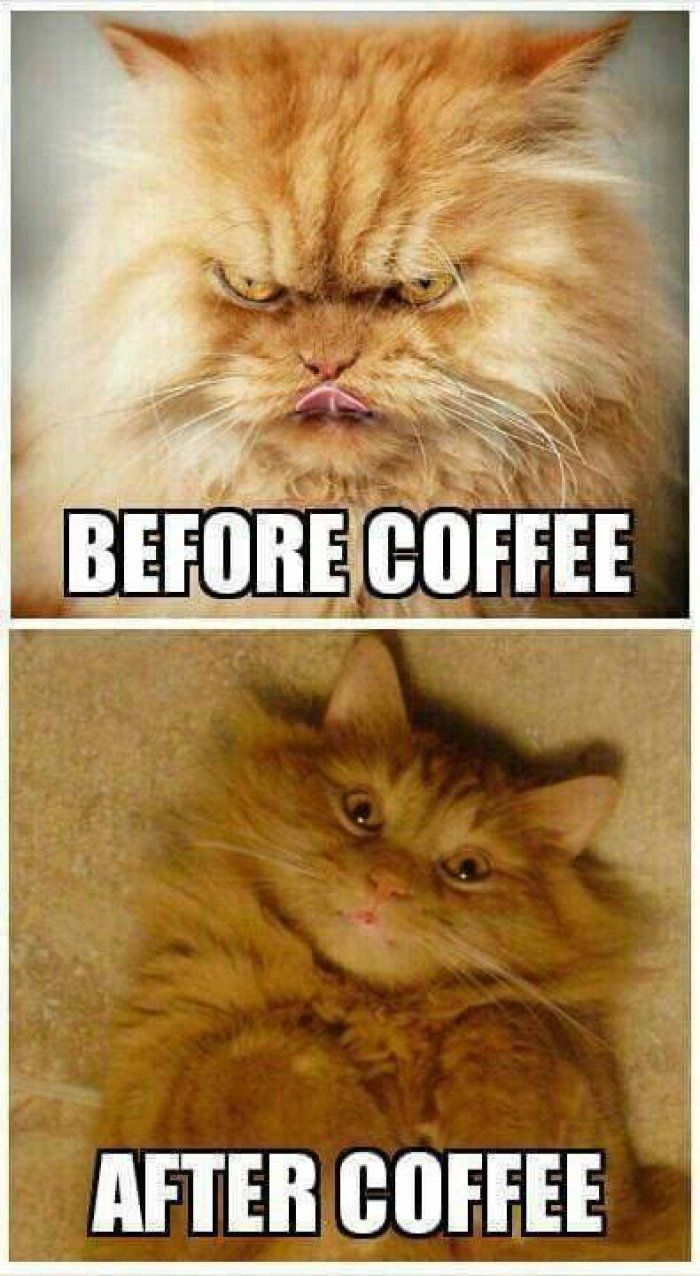 Before vs after coffee cat meme Good morning coffee