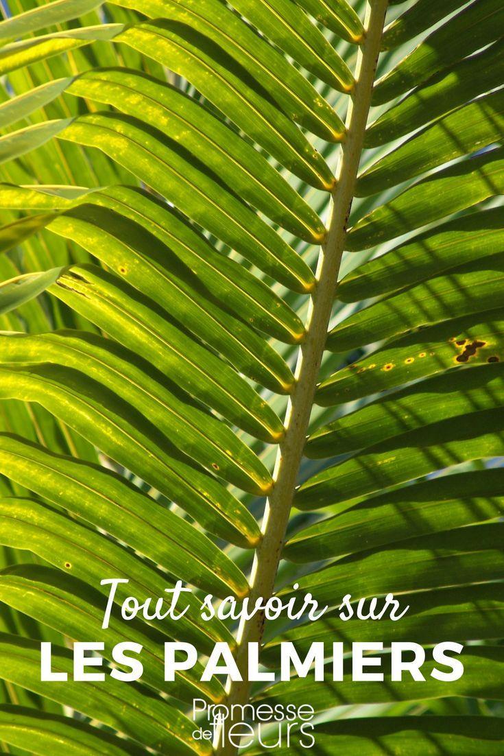 Les Palmiers Planter Cultiver Et Entretenir Exterieur