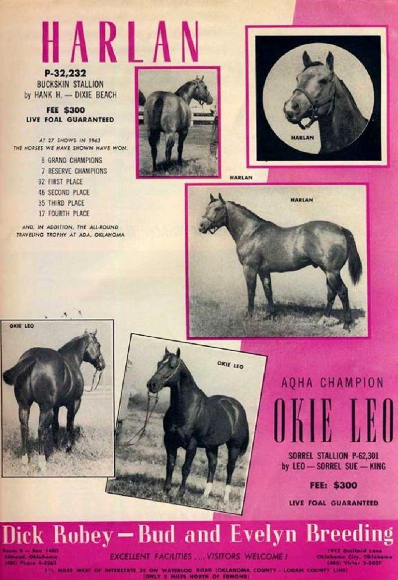 All Breed Pedigree Equine