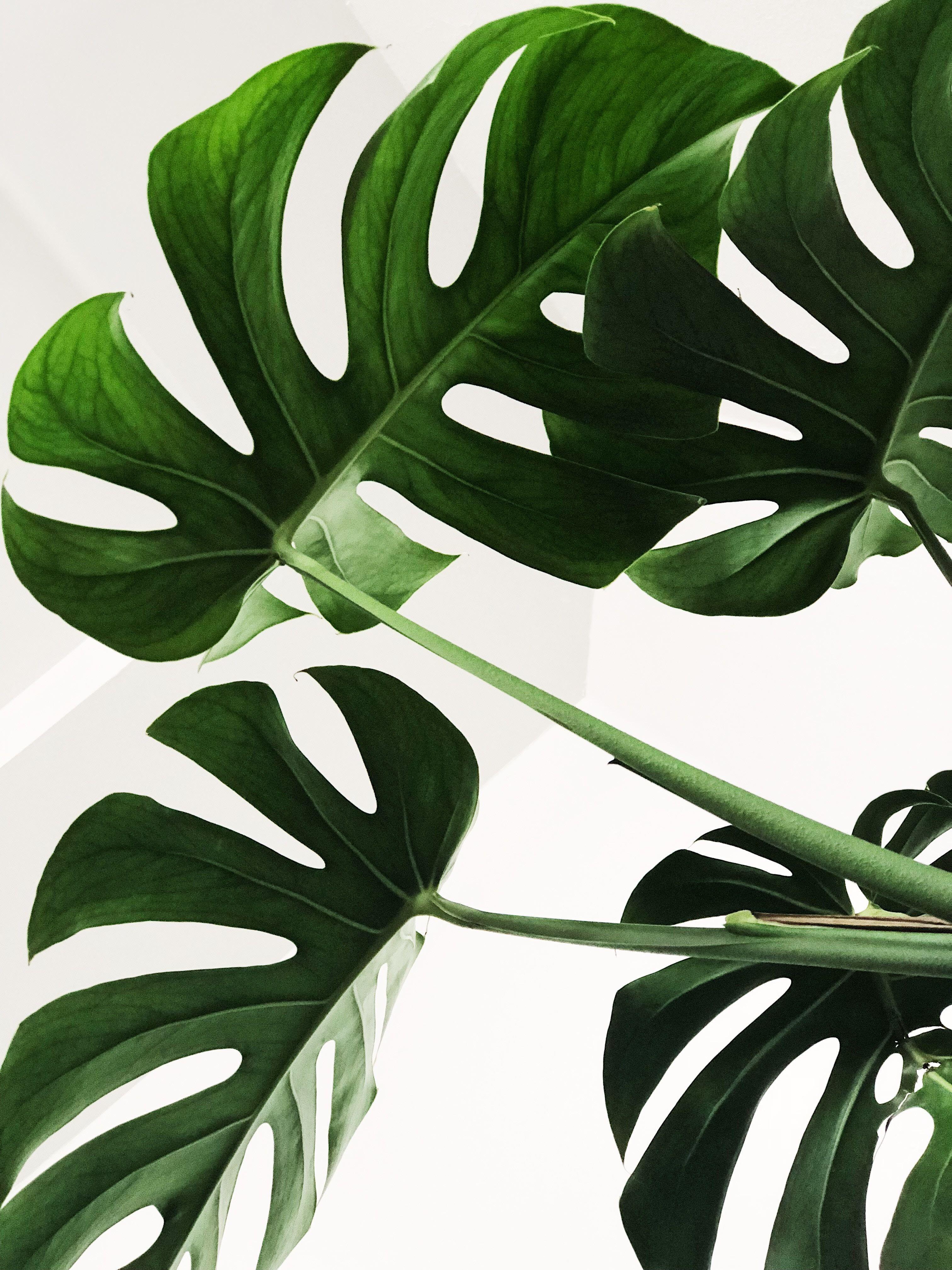 Boho Plant Painting