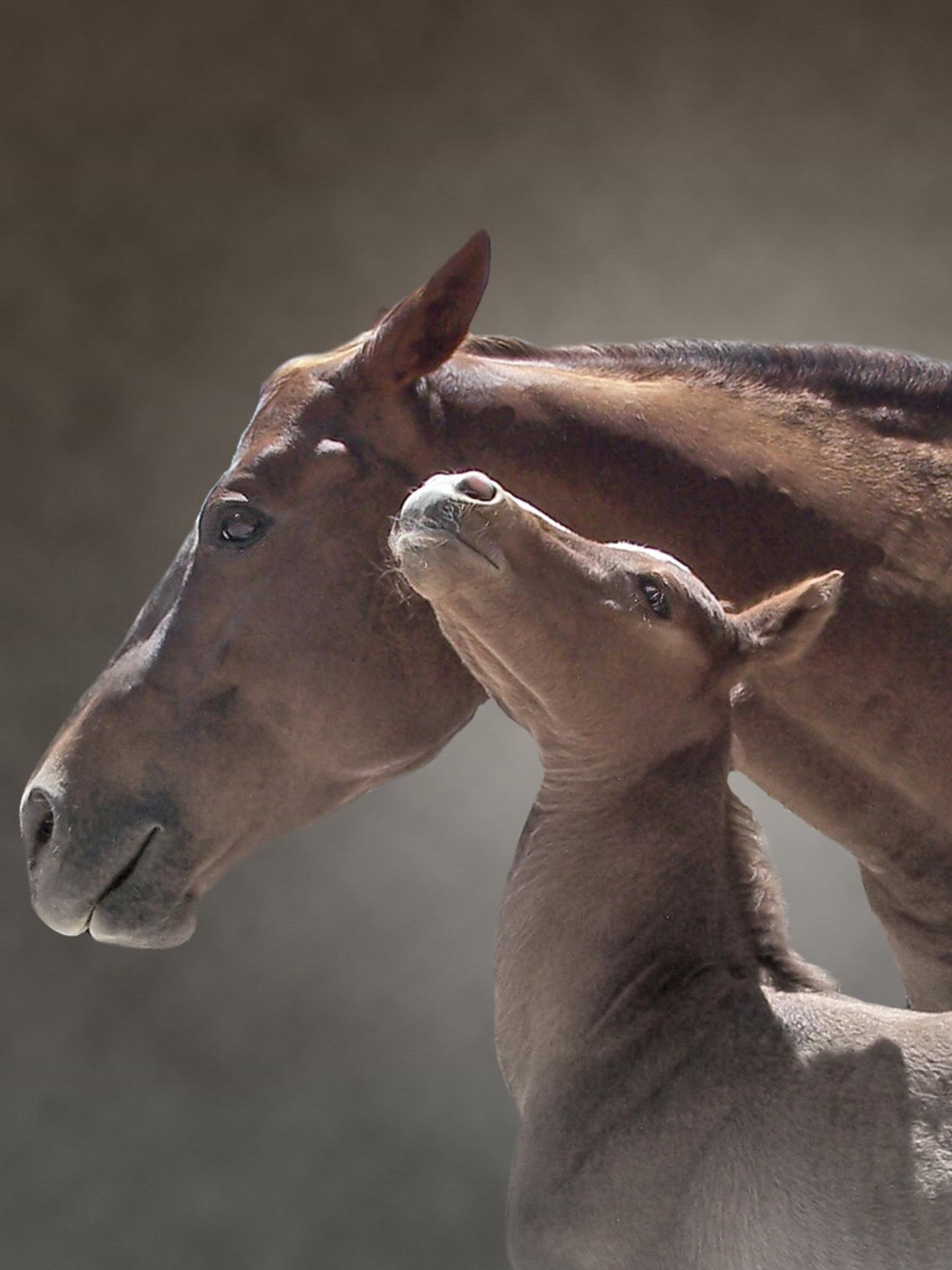 Horseanimals cutpets mothers crowdifyclub photos of