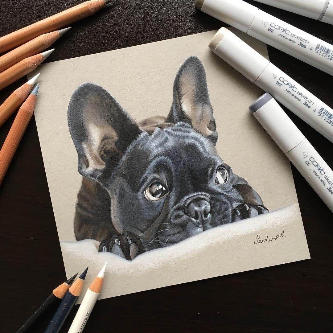 Sweet Realistic Animal Portrait Drawings French Bulldog Drawing