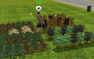7d6d72cb0a7bc1192c21f27e65a1dd2d - How To Learn Gardening Sims 3