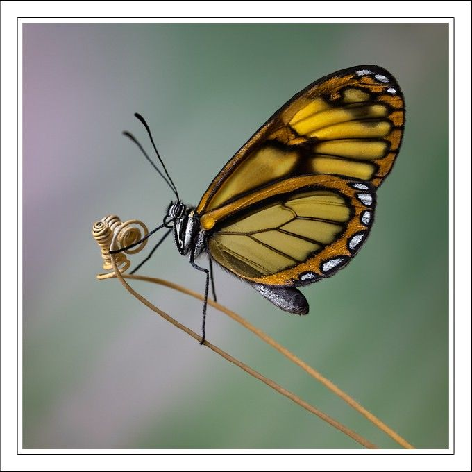 Veia By Jose R Frontado Most Beautiful Butterfly Butterfly