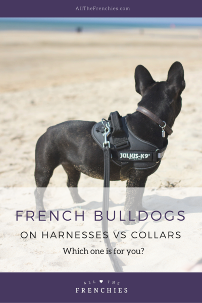 French Bulldogs Wearing Harnesses Vs Collars All The Frenchies Bulldog French Bulldog French Bulldog Harness