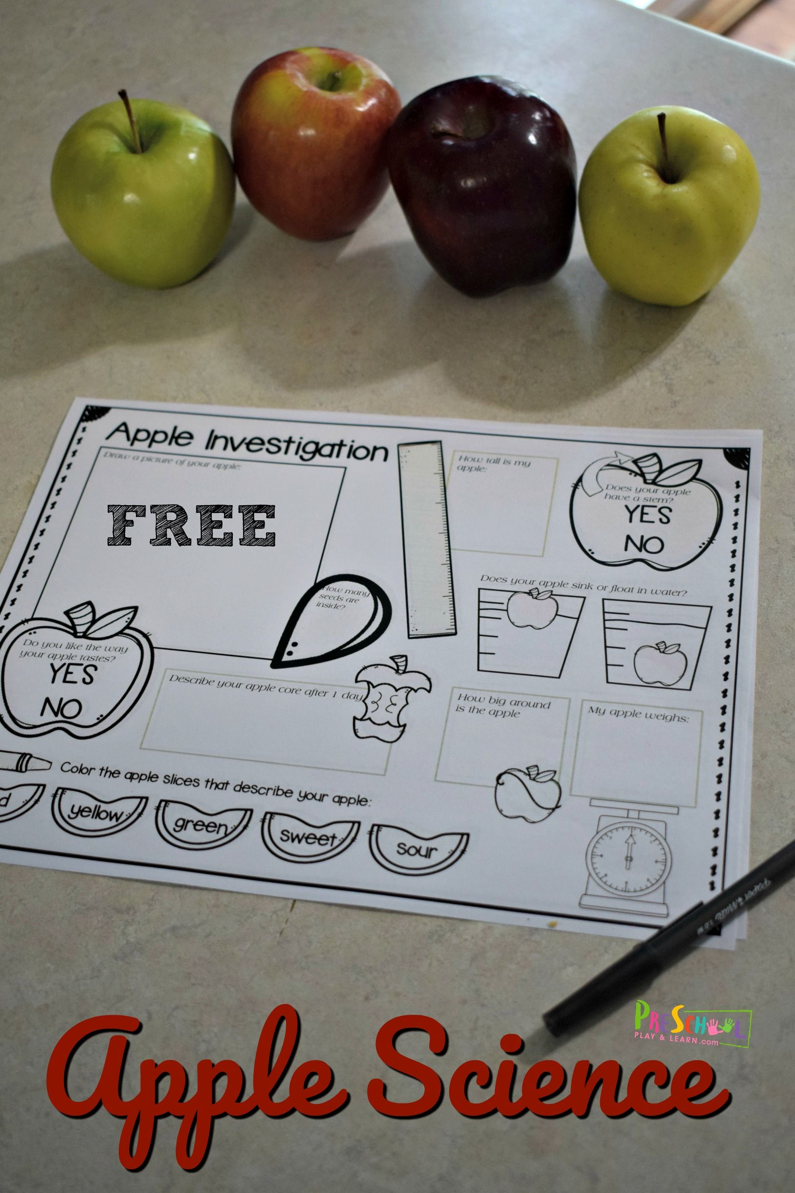 Free Apple Science Experiment Worksheet With Images