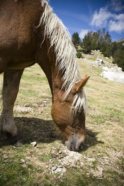Estanys de la Pera,   Cavalls lliures a la muntanya