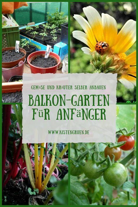 Balkongarten anlegen für Anfänger: Tricks zum Anbau von Gemüse und ...