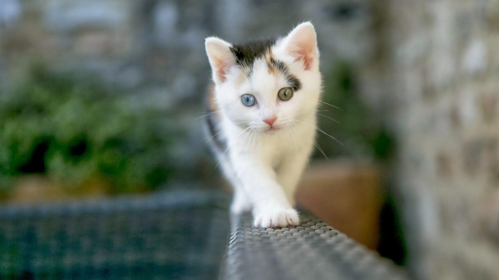 Pin Di Katzen