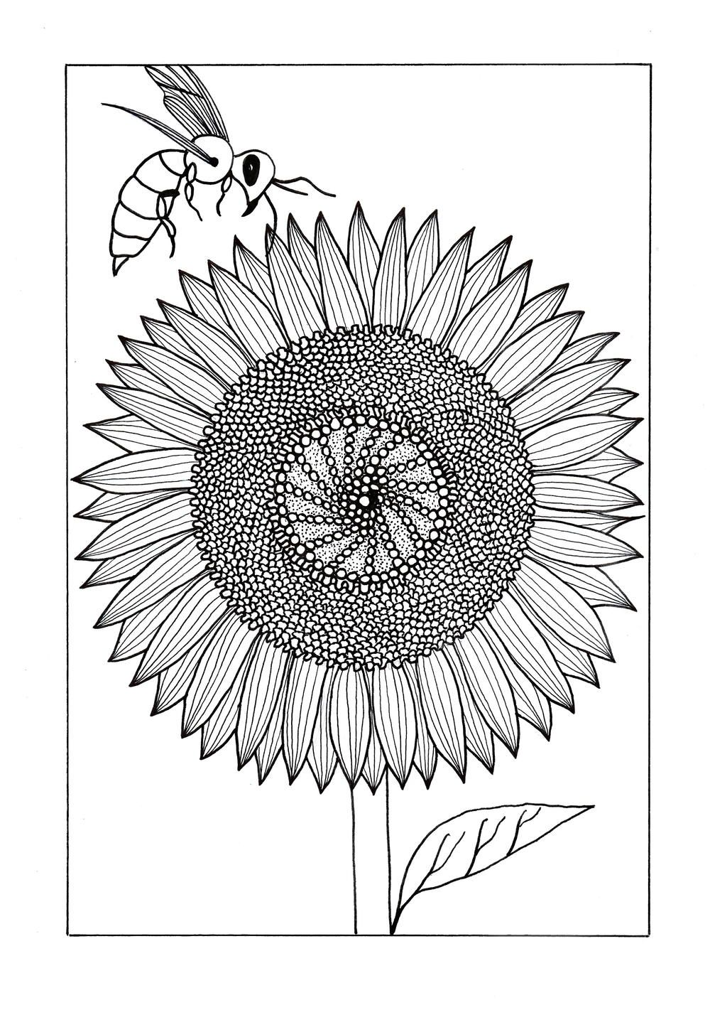 Vividly Intricate Sunflower Adult Coloring Page Sunflower