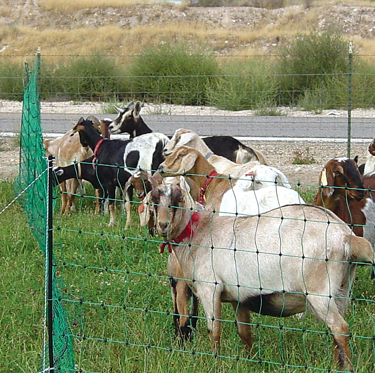 Electric Fence Netting Goats I M Going To Try This For