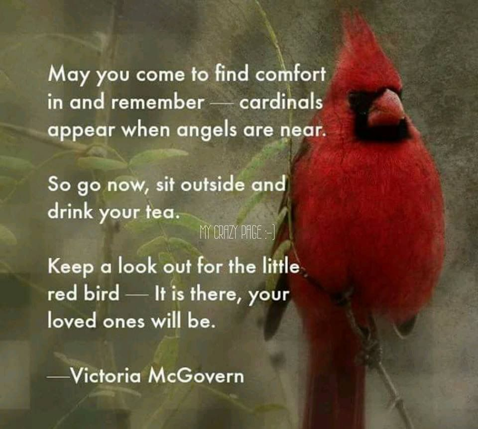 My Jeffrey Bird Loss Of Love Ones Cardinals Sayings Quotes