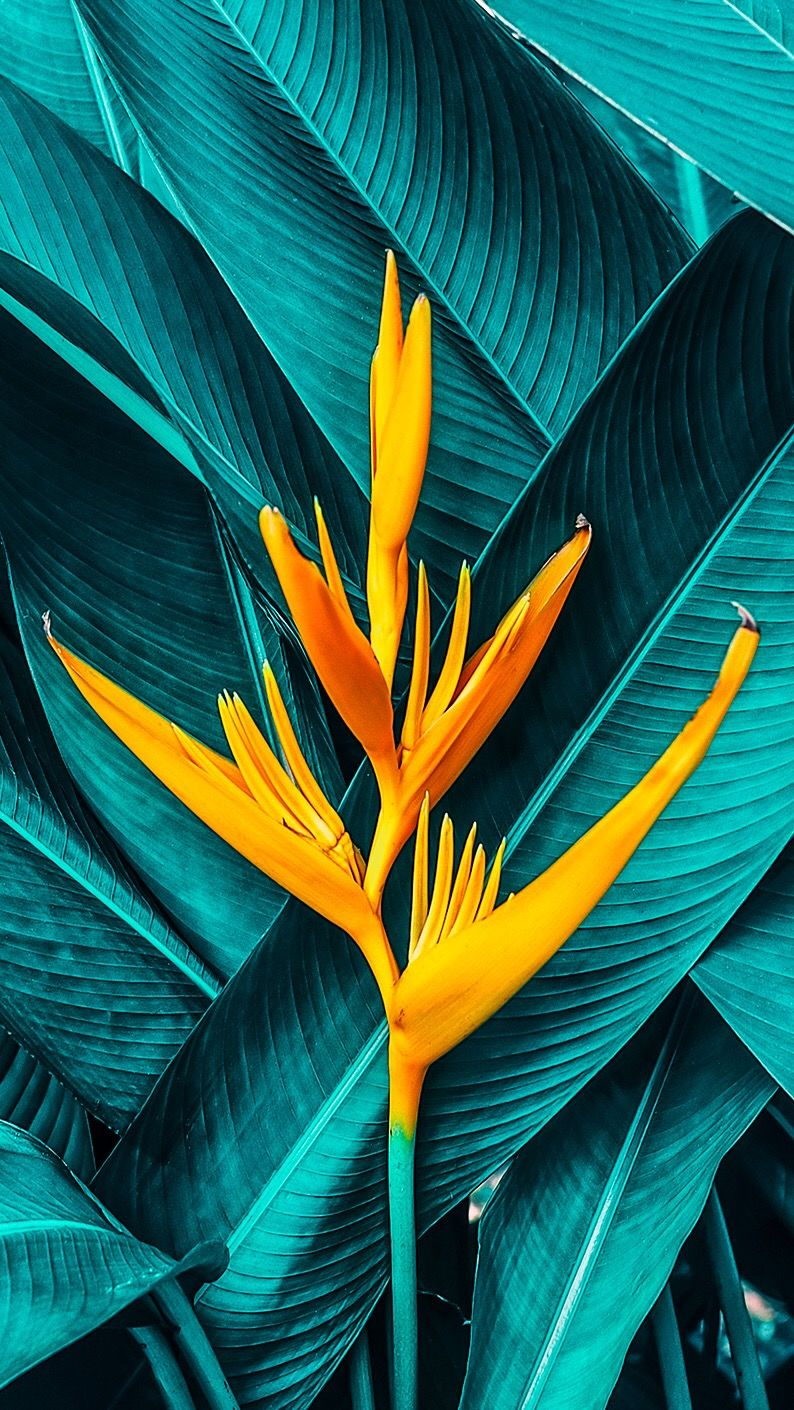 Tropical foliage & flowers #wallpaper #background #flower #tropical #floral from Uploaded by user