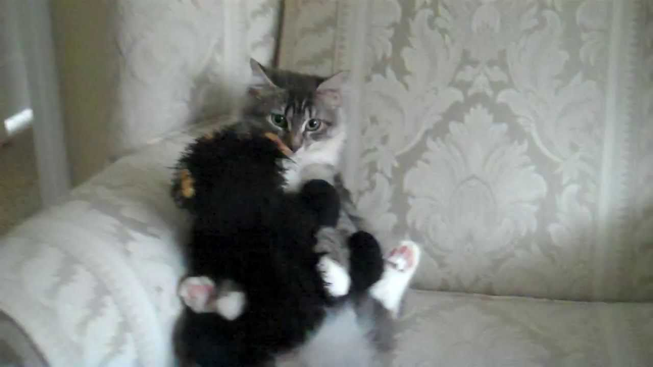 He Gave His Kitty A Stuffed Teddy Bear, Now Watch What She's Doing…Too Sweet!