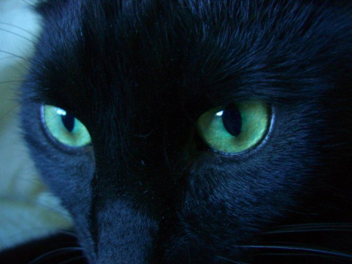 Black Cat Green Eyes Photography Cats Pretty Cats Cute Cats