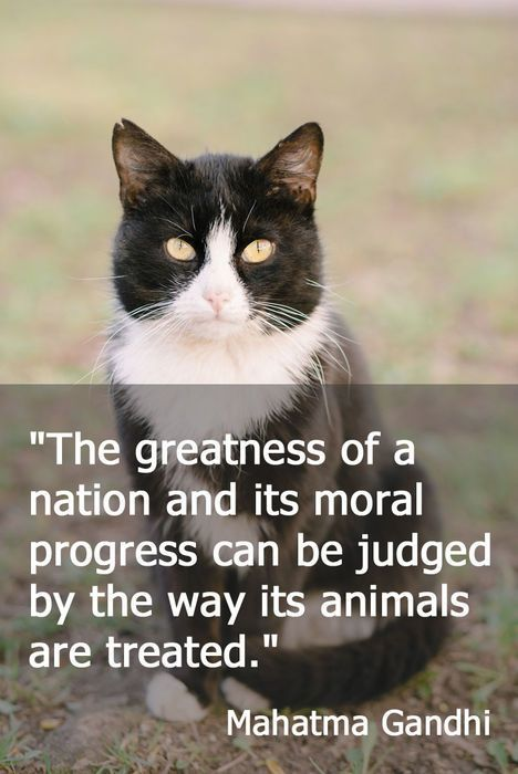 Cat Quotes Magnificent 48 Inspurrational Quotes For Proud Lovers Of Feral Cats Cat Kitty