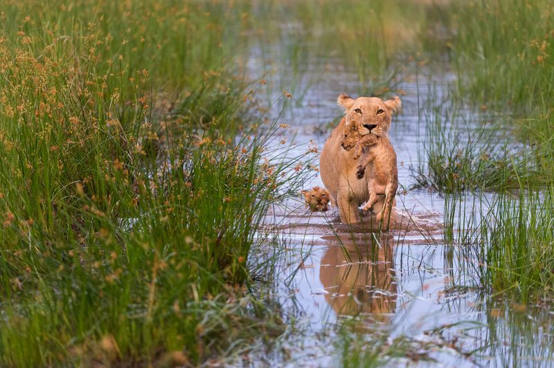 Photo Of The Day National Geographic Animals National