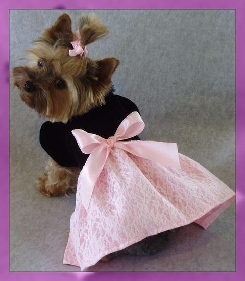 Patrones De Vestidos Para Perritas Ropa Para Perros