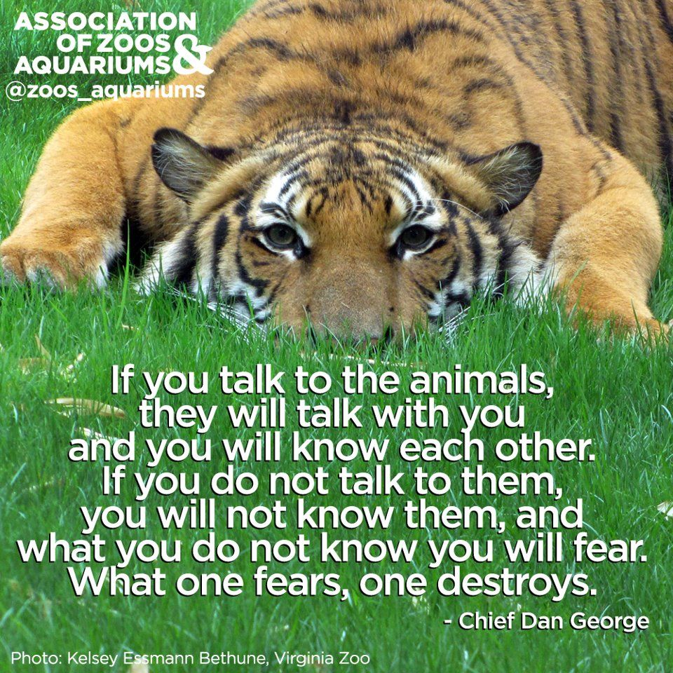 Talk With The Animals Animal Quotes Zoo Animals Zoo