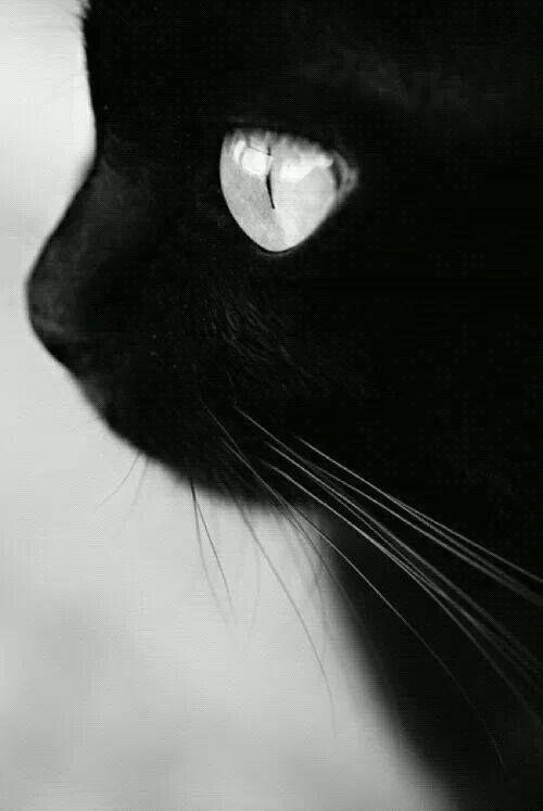 Le cat Noir