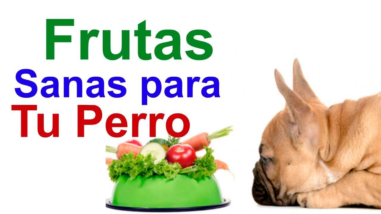Frutas Y Verduras Para Perros Que Puede Comer Saludables Food Youtube Enjoyment