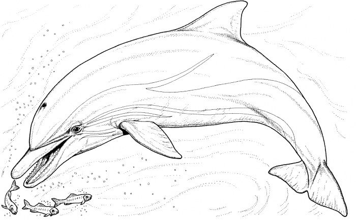 Dolphin And Several Little Fish Dolphin Coloring Pages Whale Coloring Pages Fish Coloring Page