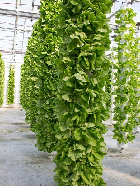 Aeroponics Vs Aquaponics What Is Aeroponics Gardening