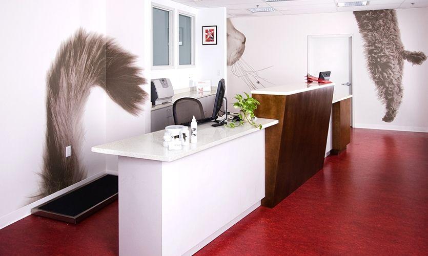 vet clinic interior design interior wall graphics pikesville animal hospital carey m