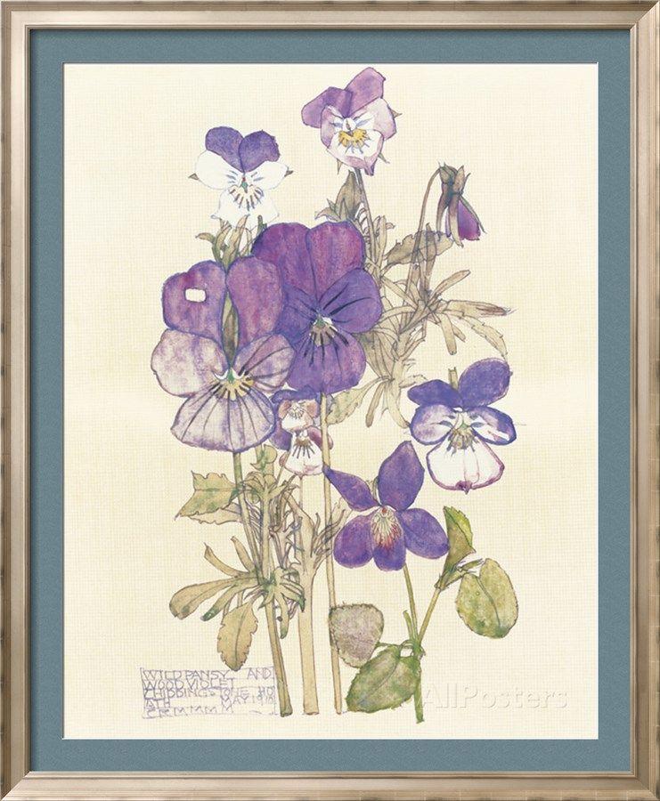 Pensamiento silvestre Lámina por Charles Rennie Mackintosh en AllPosters.es