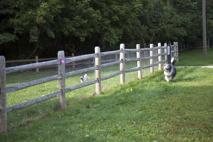 Best Off Leash Dog Parks In Toronto Dog Leash Dog Park Dogs