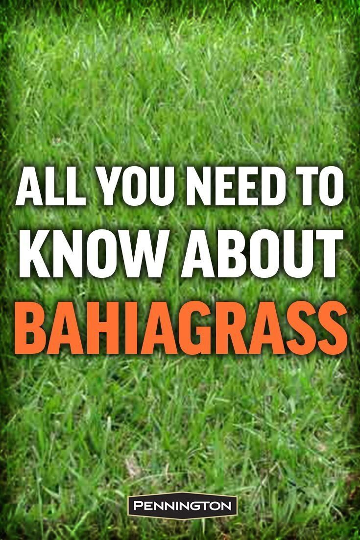 All You Need To Know About Bahiagrass Modern Design In 2020 Bahia Grass Lawn Care Business Bahia Grass Lawn