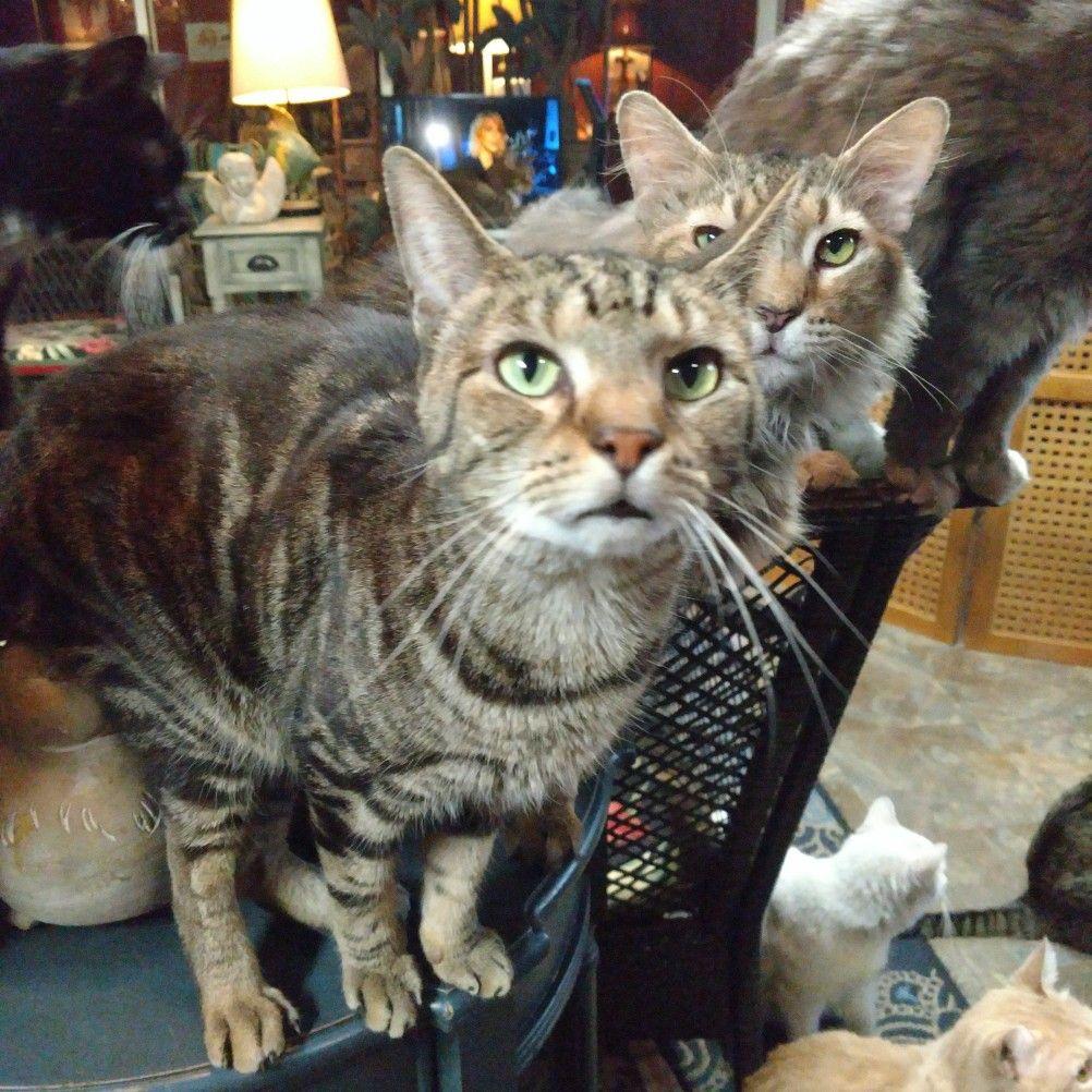 No Treats Kitty Animals Paw