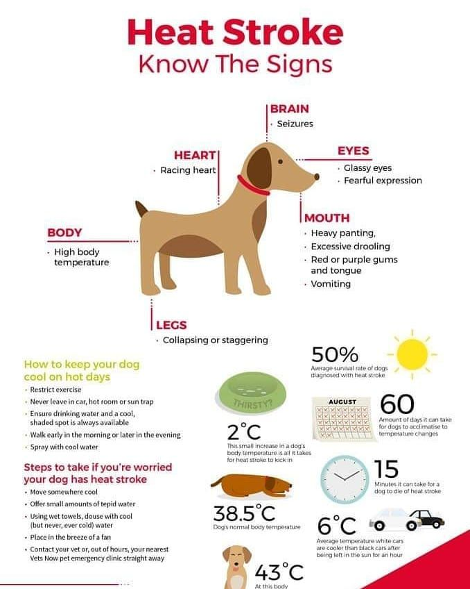 A Good Checklist For Doghealth In This Hotweather We Are Having