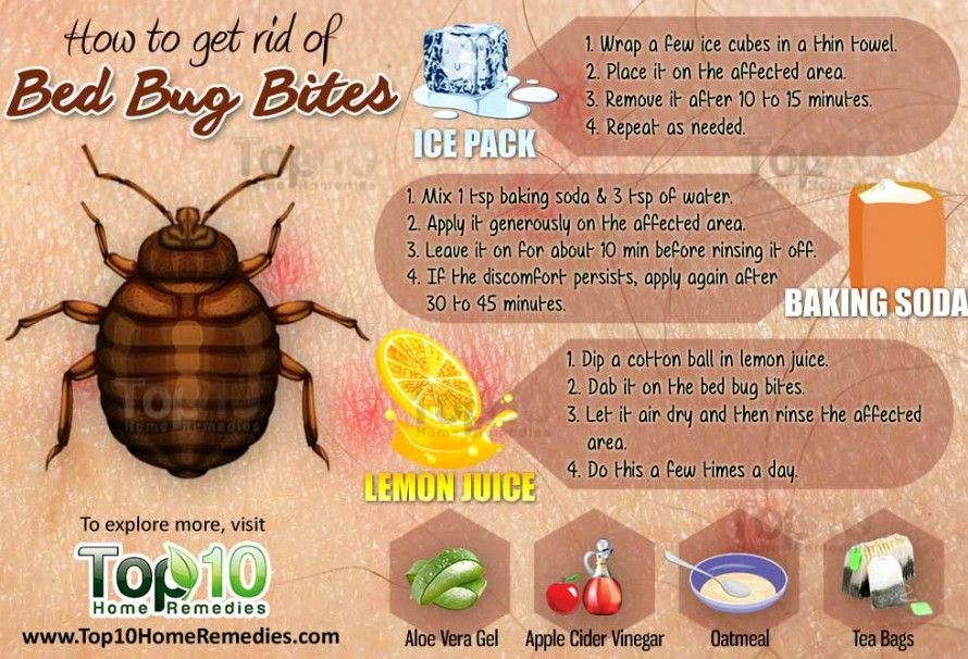 Here's How to Take Control & Get Rid of Bed Bugs from Your