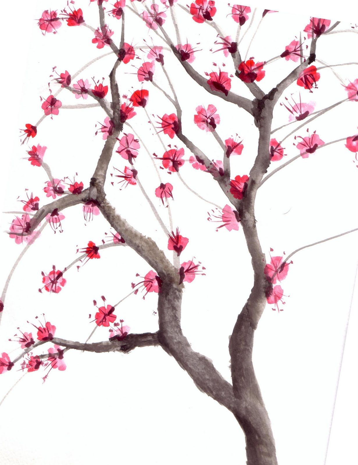 diagram the parts of cherry blossom tree reflection and refraction lab watercolor art graphic design