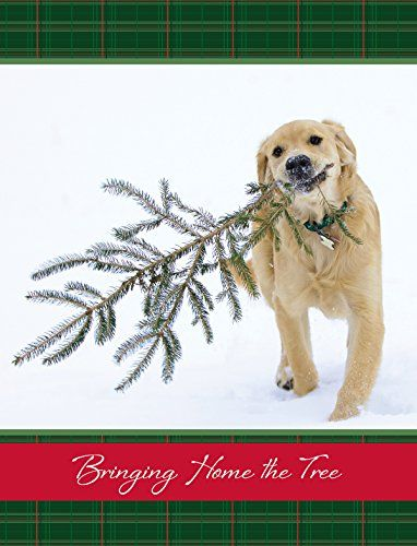 bringing home the tree golden retriever christmas cards httpswwwamazoncomdpb011qh6u0yrefcm_sw_r_pi_dp_x_slrfyb1p4yecq